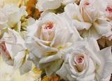 Репродукция картины Белые розы  50*70 см №1  ЛИ6